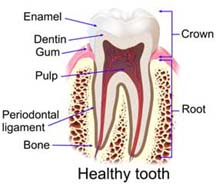rootcanal-healthy-tooth